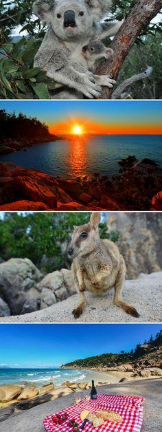 Magnetic Island - Koalas, Beaches and Sunsets Queensland Australia, Australia Travel, Iconic Australia, Western Australia, Magnetic Island, Romantic Beach Getaways, Australia Pictures, East Coast Road Trip, Beach Camping
