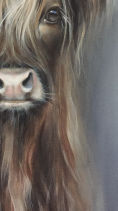 Unkempt tresses could make you think grubby and look older. Cutting creme as well as Highland Cow Painting, Highland Cow Art, Highland Cattle, Animal Sketches, Animal Drawings, Cow Pictures, Cute Cows, Rustic Art, Animal Paintings