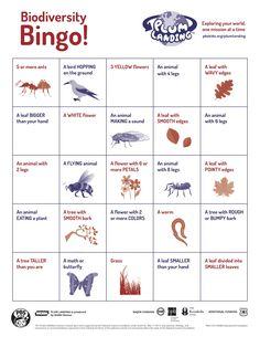 Classroom activity: Biodiversity Bingo