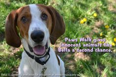 Your Paws Walk donation will go towards helping so many animals like sweet Bella. The funds raised will help provide safe shelter, medical care and training to help her succeed in her future home. Please join our biggest and most critical fundraiser by Registering to walk or supporting a walker at http://www.firstgiving.com/NHSPCA/PawsWalk15