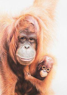 Martin Aveling Art Gallery, wildlife artist