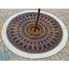 tree grates - Google Search