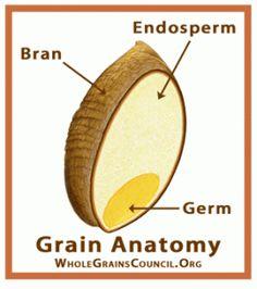 Grain Structure