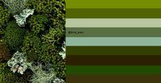 moss and lichen: original image ©Fred horticultural art via http://www.flickr.com/photos/horticultural_art/6787211088/
