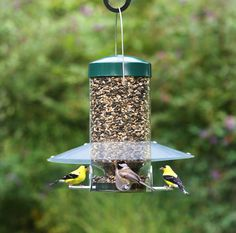 Classic Hanging Feeder: Clear, two-piece baffle is situated low—right over the seed ports to shelter birds from rain, snow and wind. And their seed is safe! Squirrels can't grasp the slick tube or reach around the baffle to steal the food.