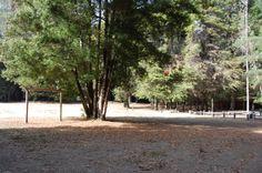 Ruiles   reserva Forestal Federico Albert  region del Maule Chanco