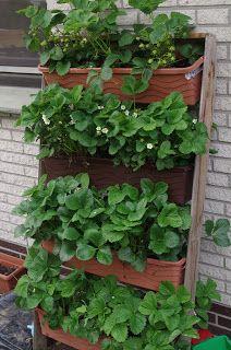 Ein Blog über exotische Pflanzen, die durch Entnahme ihrer Kerne gezogen wurden, Früchte und Rezepte.