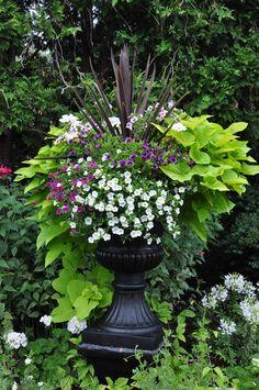 Sweet Potato Vine, Petunias, Spikes - Three Dogs in a Garden