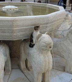 Just A Collection of Unconventional Cats. I Love Cats, Crazy Cats, Cool Cats, Funny Cats, Funny Animals, Cute Animals, Cute Kittens, Cats And Kittens, Cat People