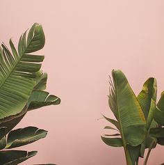 shop print pink green leaves plants maria corona photography 2015.jpg