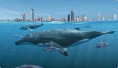 whales_pic.jpg (457×264)