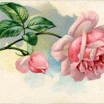 Free Vintage Images - Lovely Pink Rose - The Graphics Fairy Vintage Ephemera, Vintage Cards, Vintage Postcards, Vintage Images, Graphics Fairy, Free Graphics, Floral Vintage, Vintage Flowers, Vintage Theme