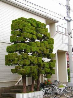 Ideas Small Landscape Trees Hedges For 2019 Topiary Garden, Topiary Trees, Garden Trees, Trees To Plant, Garden Art, Small Landscape Trees, Small Trees, Bonsai, Home Garden Design