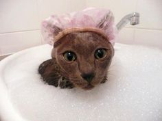 Don't forget to put on your cap cat before getting in the bath!