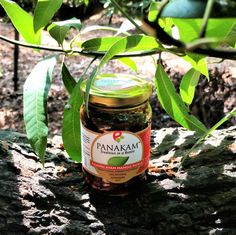 Rajapalayam Mango Pickle from Panakam-Tradition in a Bottle. The pickle bottle at one of the branches of an almost 100 year Mango tree in Rajapalayam in the farm where the mangoes are sourced for this product. Farm to Fork. Terroir of Rajapalayam near the foothills of the Western Ghats in south Tamilnadu - India