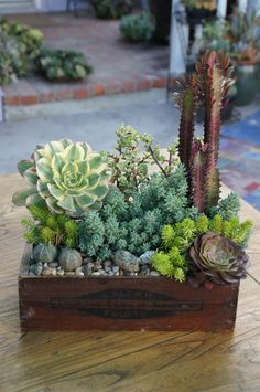 Reclaimed succulent container and beautiful arrangement.