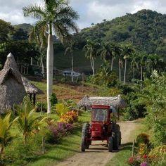 Los campos de Cuba.