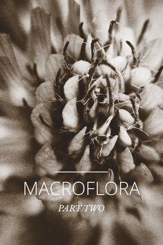 Photography macrophotography