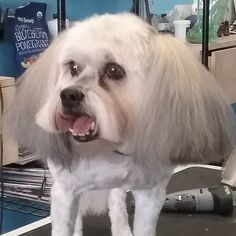 Emma Lou #tucsondoggrooming #doggrooming #wagsmytail A well groomed dog is a well loved dog! Call us today to schedule your dog grooming appointment 520-744-7040