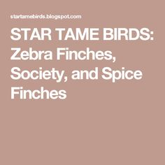 STAR TAME BIRDS: Zebra Finches, Society, and Spice Finches