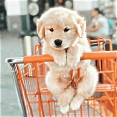 Super Cute Puppies, Baby Animals Super Cute, Cute Wild Animals, Cute Baby Dogs, Baby Animals Pictures, Cute Little Puppies, Cute Funny Dogs, Cute Dogs And Puppies, Cute Little Animals