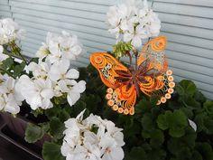 Motýl v pelargonii