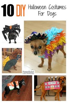 10 diy halloween costumes for dogs - How To Make A Dog Halloween Costume