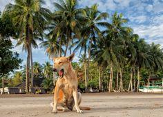 Palawan Beach Dog by PJ van Schalkwyk on 500px