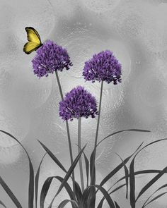 Purple Gray Yellow Modern Floral Wall Art by LittlePiePhotoArt