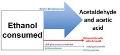 Biomedical Laboratory Science: Biochemical Markers of Alcohol Consumption
