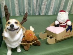 Barney is pretty excited about his new job as a reindeer.
