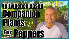 Pepper Plants, Companion Planting, Growing Peppers, Herb Garden In Kitchen, Container Gardening, Stuffed Peppers, Flower Beds, Harvest