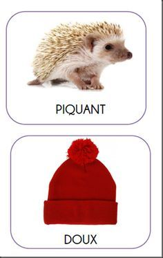 Les contraires : doux et piquant. Shapes For Kids, Petite Section, French Immersion, School Games, Teaching French, Kids Learning, Activities For Kids, Nursery Activities, Literacy