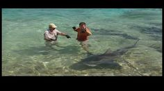 Great White Shark Attacks On Humans   ... experiment to show that sharks are not interested in humans as food