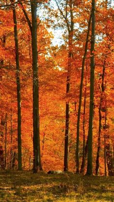 Autumn in Pennsylvania - SWPA has most diverse array of deciduous trees in the world, therefore best place to experience autumn!