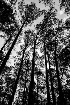 Nieuw in mijn Werk aan de Muur shop: Zwart wit foto van de bomen om mij heen