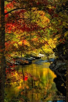 Autumn Afternoon, Cherokee National Forest, Tennessee - just beautiful! Fall Pictures, Pretty Pictures, Beautiful World, Beautiful Places, Amazing Places, Simply Beautiful, Autumn Scenes, All Nature, Belle Photo