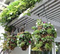 How to make cheap, fabulous hanging baskets DIY (check the dollar store for hanging baskets!)