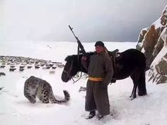 """You may think you're cool, but you will never be as cool as this Mongolian Shepherd with his and pet snow leopard."" (History in Pictures) Wildlife Photography, Animal Photography, Best Funny Pictures, Cool Pictures, Random Pictures, Leopards, Snow Leopard, Spirit Animal, Big Cats"
