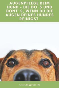 Die Augenpflege beim Hund ist unverzichtbar und wird dennoch oft vernachlässigt. Dabei ist sie eigentlich ganz einfach. Was es zu beachten gibt und wie du die Augen deines Hundes am besten pflegst verraten wir dir hier. Augenpflege Hund | Augentropfen | Augensalbe | Augen reinigen | Hundegesundheit | Hundewissen | Tierarzt | Tränenflüssigkeit | Bindehautentzündung | Kamillentee | gereizte Augen
