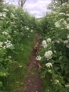 Eyck the Dog wanders through an idyllic Scottish field. #dogs #Scotland #landscape Beautiful Space, Beautiful Things, Scotland Landscape, Garden Of Earthly Delights, King And Country, Border Terrier, Amazing Architecture, Places To See, Ireland