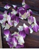 Purple and White Orchid Petals $11 box / 3 boxes for $10 each