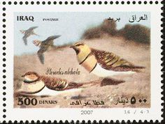 Pin-tailed Sandgrouse stamps - mainly images - gallery format