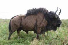 Prehistoric Wildlife, Prehistoric Creatures, Mythical Creatures, Stone Age Animals, Big Horses, Extinct Animals, Wild Nature, Fauna, Fantastic Beasts
