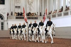 The Spanish Riding School in Vienna is the only institution in the world which has practised for over 440 years and continues to cultivate classical equitation in the Renaissance tradition of the. Spanish Riding School Vienna, Lippizaner, Current Events News, Lipizzan, White Horses, Horse Breeds, Learning Spanish, Spanish Class, Horse Riding