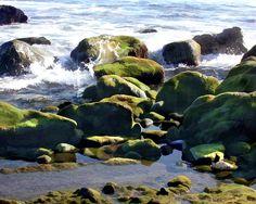 Orange County Painting - Coastal Tidepools by Elaine Plesser