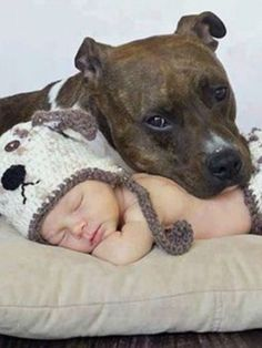 I adore this. I grew up with pits, beautiful, loving dogs!