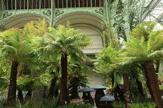 "Tableau végétal ""Jungle"" #ThierryHuau"