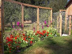 Garden trellis panels which become a fence... This is a dream fence for anyone in deer country. Very slick and very worth sharing.  Tina Reaume…