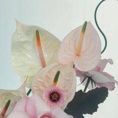 (Source: hautebasics, via ktsmail) Plants Are Friends, No Rain, Flowering Trees, Flower Pictures, Plant Decor, Beautiful Flowers, Prettiest Flowers, Planting Flowers, Floral Arrangements